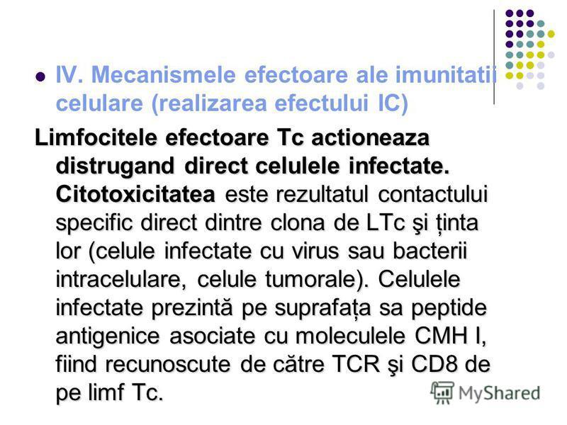IV. Mecanismele efectoare ale imunitatii celulare (realizarea efectului IC) Limfocitele efectoare Tc actioneaza distrugand direct celulele infectate. Citotoxicitatea este rezultatul contactului specific direct dintre clona de LTc şi ţinta lor (celule