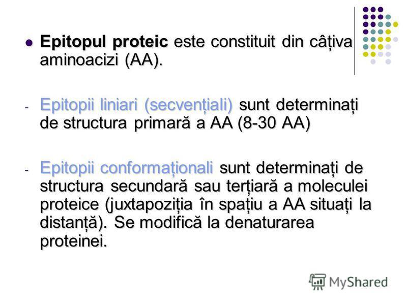 Epitopul proteic este constituit din câţiva aminoacizi (AA). Epitopul proteic este constituit din câţiva aminoacizi (AA). - Epitopii liniari (secvenţiali) sunt determinaţi de structura primară a AA (8-30 AA) - Epitopii conformaţionali sunt determinaţ