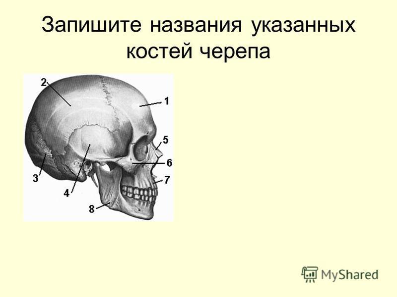 Запишите названия указанных костей черепа