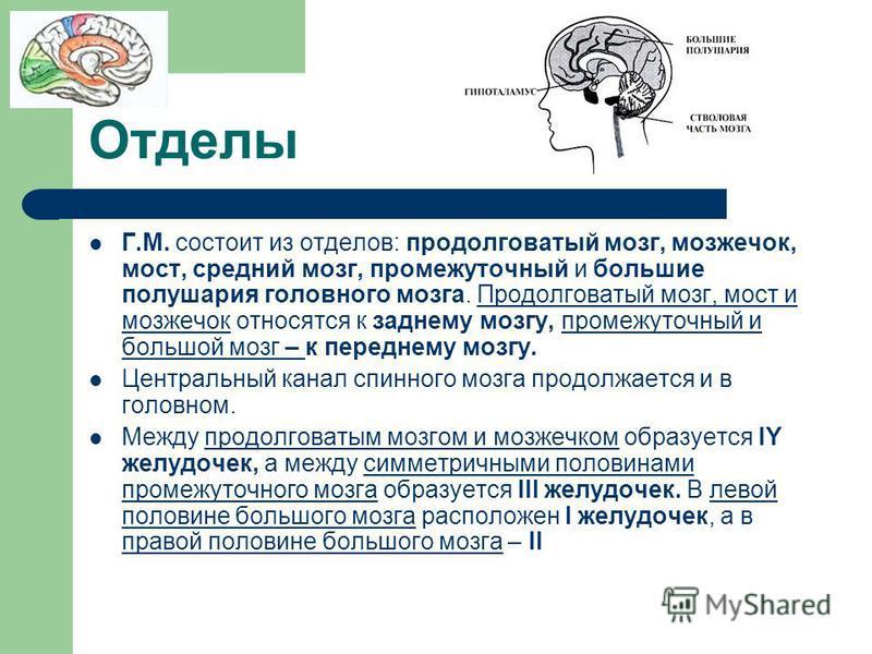 Отделы Г.М. состоит из отделов: продолговатый мозг, мозжечок, мост, средний мозг, промежуточный и большие полушария головного мозга. Продолговатый мозг, мост и мозжечок относятся к заднему мозгу, промежуточный и большой мозг – к переднему мозгу. Цент