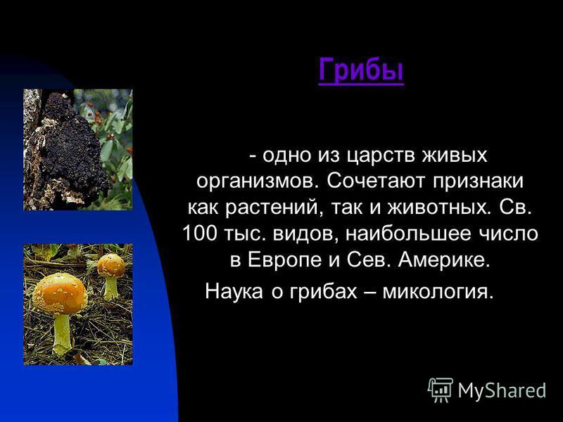 - одно из царств живых организмов. Сочетают признаки как растений, так и животных. Св. 100 тыс. видов, наибольшее число в Европе и Сев. Америке. Наука о грибах – микология. Грибы