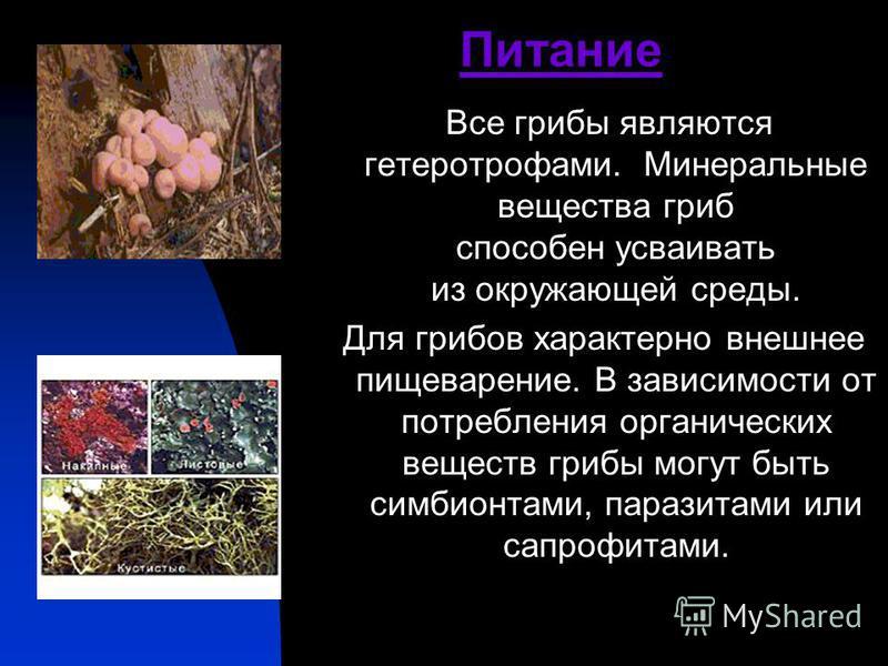 Питание Все грибы являются гетеротрофами. Минеральные вещества гриб способен усваивать из окружающей среды. Для грибов характерно внешнее пищеварение. В зависимости от потребления органических веществ грибы могут быть симбионтами, паразитами или сапр