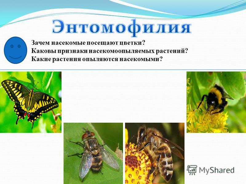 Зачем насекомые посещают цветки? Каковы признаки насекомоопыляемых растений? Какие растения опыляются насекомыми?