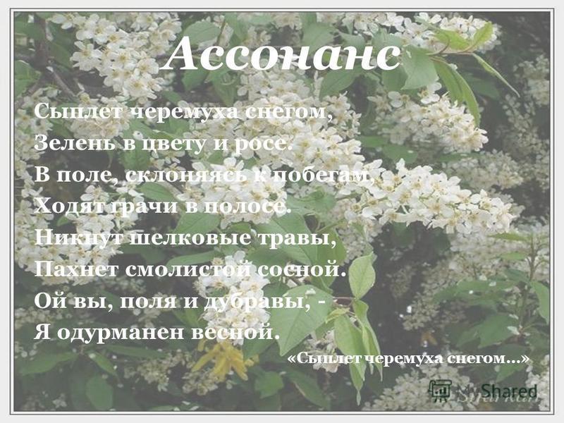 Ассонанс Сыплет черемуха снегом, Зелень в цвету и росе. В поле, склоняясь к побегам, Ходят грачи в полосе. Никнут шелковые травы, Пахнет смолистой сосной. Ой вы, поля и дубравы, - Я одурманен весной. «Сыплет черемуха снегом…»