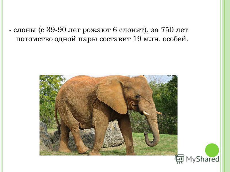 - слоны (с 39-90 лет рожают 6 слонят), за 750 лет потомство одной пары составит 19 млн. особей.
