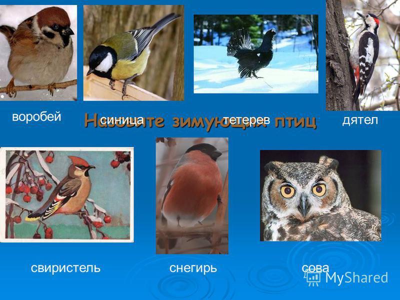 Назовите зимующих птиц воробей синица свиристель дятел сова снегирь тетерев