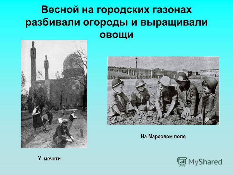 Весной на городских газонах разбивали огороды и выращивали овощи У мечети На Марсовом поле