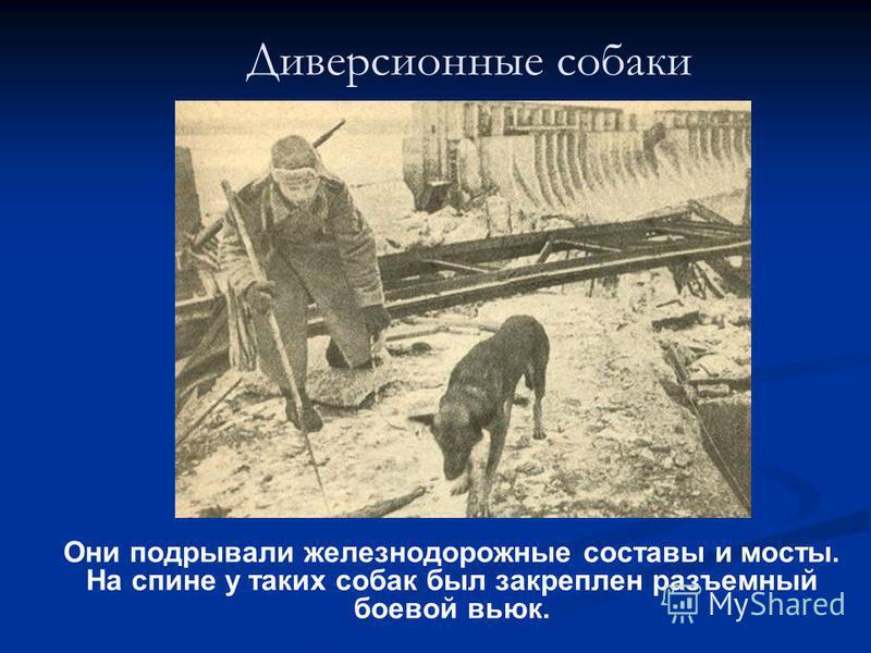 Диверсионные собаки Они подрывали железнодорожные составы и мосты. На спине у таких собак был закреплен разъемный боевой вьюк.