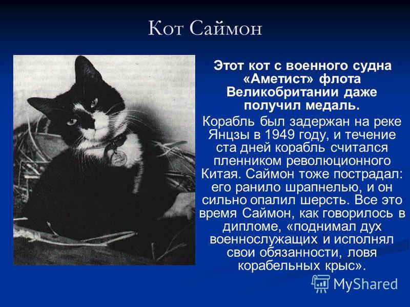 Кот Саймон Этот кот с военного судна «Аметист» флота Великобритании даже получил медаль. Корабль был задержан на реке Янцзы в 1949 году, и течение ста дней корабль считался пленником революционного Китая. Саймон тоже пострадал: его ранило шрапнелью,
