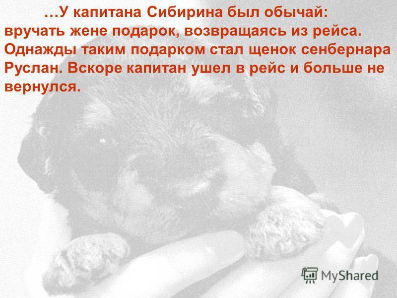 …У капитана Сибирина был обычай: вручать жене подарок, возвращаясь из рейса. Однажды таким подарком стал щенок сенбернара Руслан. Вскоре капитан ушел в рейс и больше не вернулся.