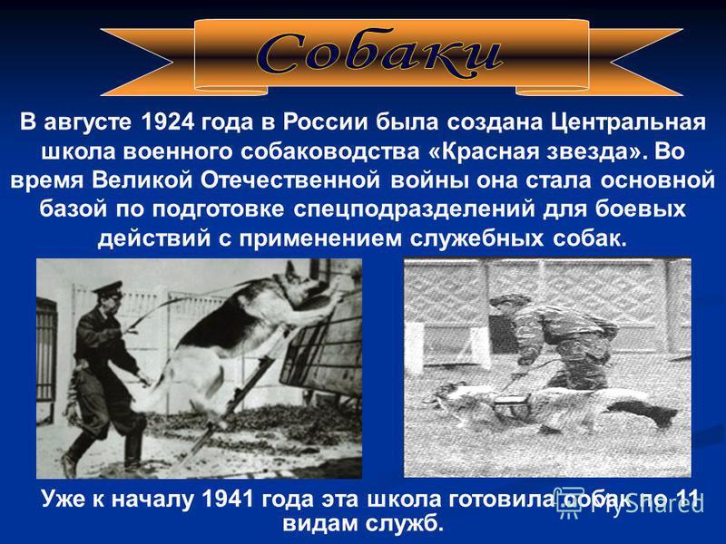 В августе 1924 года в России была создана Центральная школа военного собаководства «Красная звезда». Во время Великой Отечественной войны она стала основной базой по подготовке спецподразделений для боевых действий с применением служебных собак. Уже