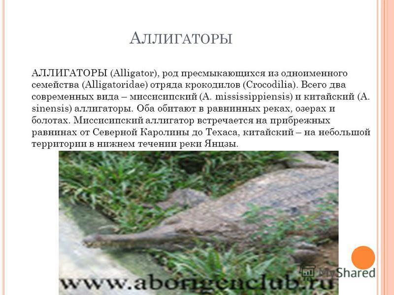 А ЛЛИГАТОРЫ АЛЛИГАТОРЫ (Alligator), род пресмыкающихся из одноименного семейства (Alligatoridae) отряда крокодилов (Crocodilia). Всего два современных вида – миссисипский (A. mississippiensis) и китайский (A. sinensis) аллигаторы. Оба обитают в равни