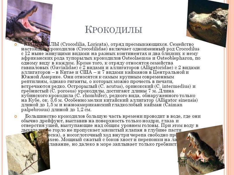 К РОКОДИЛЫ КРОКОДИЛЫ (Crocodilia, Loricata), отряд пресмыкающихся. Семейство настоящих крокодилов (Crocodilidae) включает одноименный род Crocodilus с 12 ныне живущими видами на разных континентах и два близких к нему африканских рода тупорылых кроко
