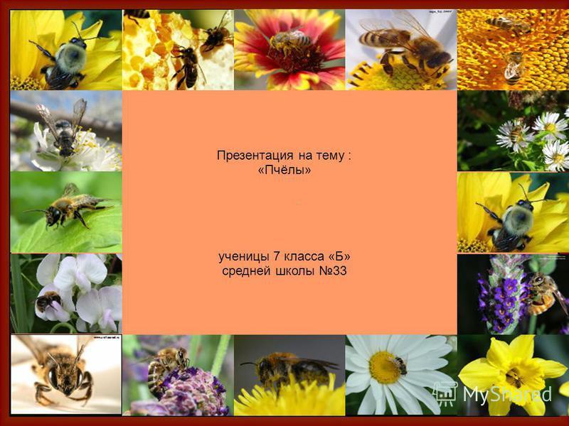 Презентация на тему : «Пчёлы» ученицы 7 класса «Б» средней школы 33