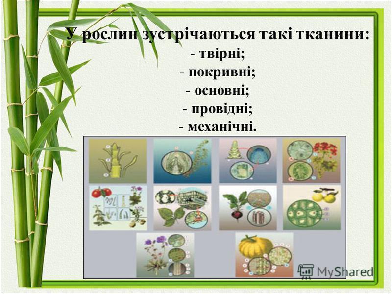 У рослин зустрічаються такі тканини: - твірні; - покривні; - основні; - провідні; - механічні.