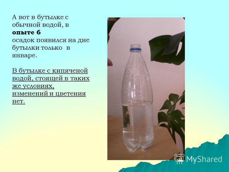 А вот в бутылке с обычной водой, в опыте 6 осадок появился на дне бутылки только в январе. В бутылке с кипяченой водой, стоящей в таких же условиях, изменений и цветения нет.