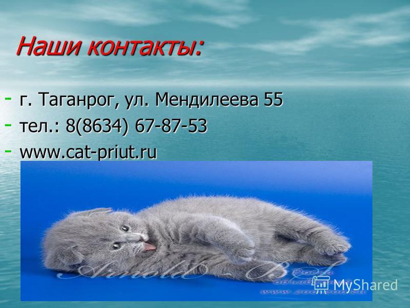 Наши контакты: - г. Таганрог, ул. Мендилеева 55 - тел.: 8(8634) 67-87-53 - www.cat-priut.ru