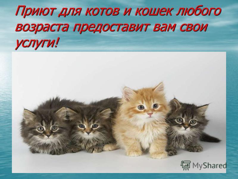 Приют для котов и кошек любого возраста предоставит вам свои услуги!