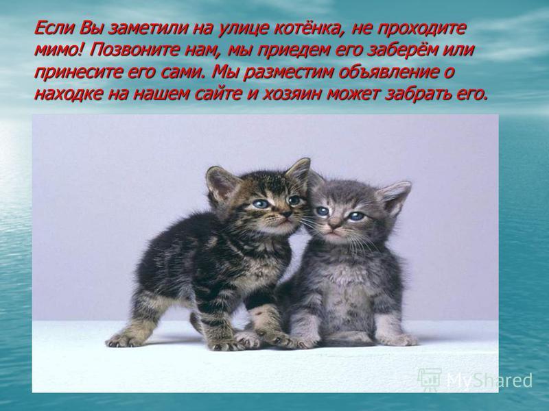 Если Вы заметили на улице котёнка, не проходите мимо! Позвоните нам, мы приедем его заберём или принесите его сами. Мы разместим объявление о находке на нашем сайте и хозяин может забрать его.