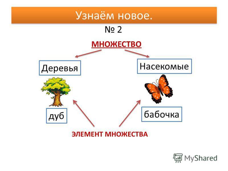 2 Узнаём новое. Деревья Насекомые дуб бабочка МНОЖЕСТВО ЭЛЕМЕНТ МНОЖЕСТВА