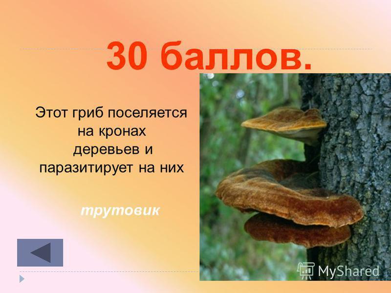 20 баллов. мицелием Чем представлено вегетативное тело грибов
