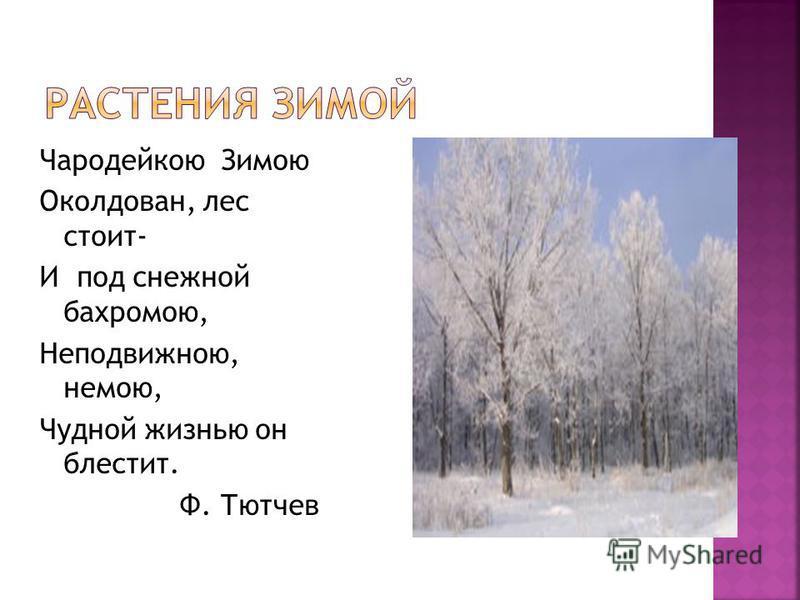 Чародейкою Зимою Околдован, лес стоит- И под снежной бахромою, Неподвижною, немою, Чудной жизнью он блестит. Ф. Тютчев