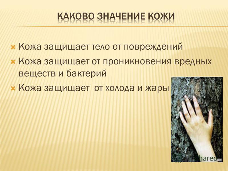 Кожа защищает тело от повреждений Кожа защищает от проникновения вредных веществ и бактерий Кожа защищает от холода и жары