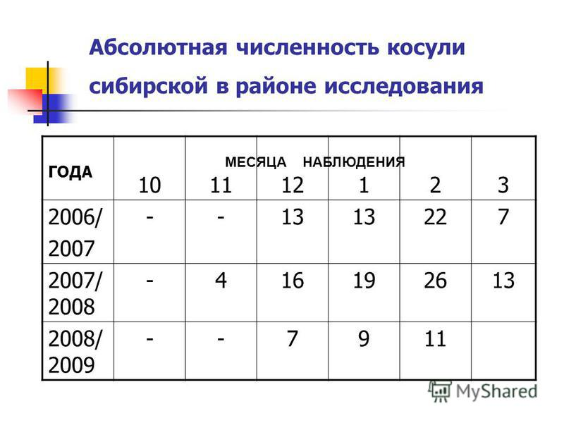 Абсолютная численность косули сибирской в районе исследования ГОДА 101112123 2006/ 2007 --13 227 2007/ 2008 -416192613 2008/ 2009 --7911 МЕСЯЦА НАБЛЮДЕНИЯ