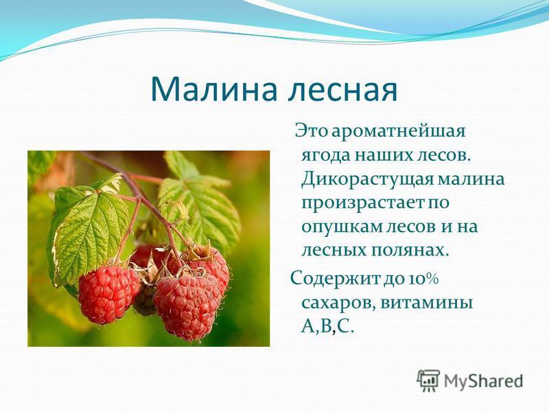 Малина лесная Это ароматнейшая ягода наших лесов. Дикорастущая малина произрастает по опушкам лесов и на лесных полянах. Содержит до 10 % сахаров, витамины А,В,С.