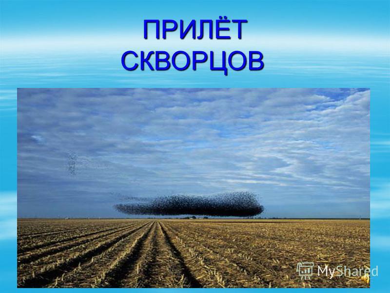 ПРИЛЁТ СКВОРЦОВ