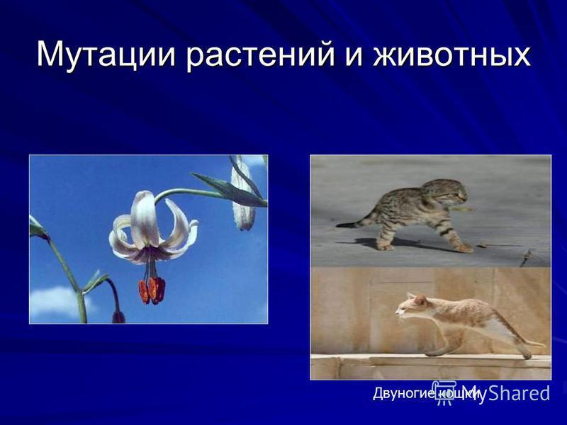 Двуногие кошки Мутации растений и животных