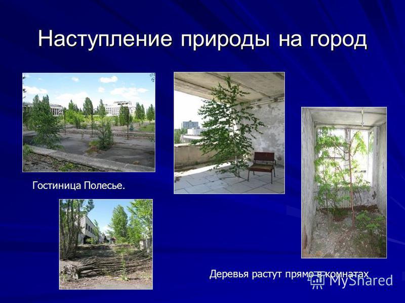 Гостиница Полесье. Деревья растут прямо в комнатах Наступление природы на город