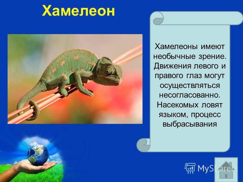 Free Powerpoint Templates Page 27 Хамелеон Хамелеоны имеют необычные зрение. Движения левого и правого глаз могут осуществляться несогласованно. Насекомых ловят языком, процесс выбрасывания