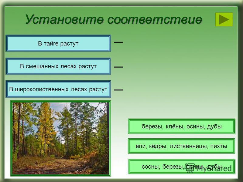 сосны, березы, осины, дубы ели, кедры, лиственницы, пихты березы, клёны, осины, дубы В тайге растут _ В смешанных лесах растут В широколиственных лесах растут _ _