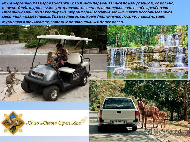 Из-за огромных размеров зоопарка Khao Kheow передвигаться по нему пешком, довольно, сложно. Сюда туристы могут приехать на личном автотранспорте либо арендовать маленькую машину для гольфа на территории зоопарка. Можно также воспользоваться местным т
