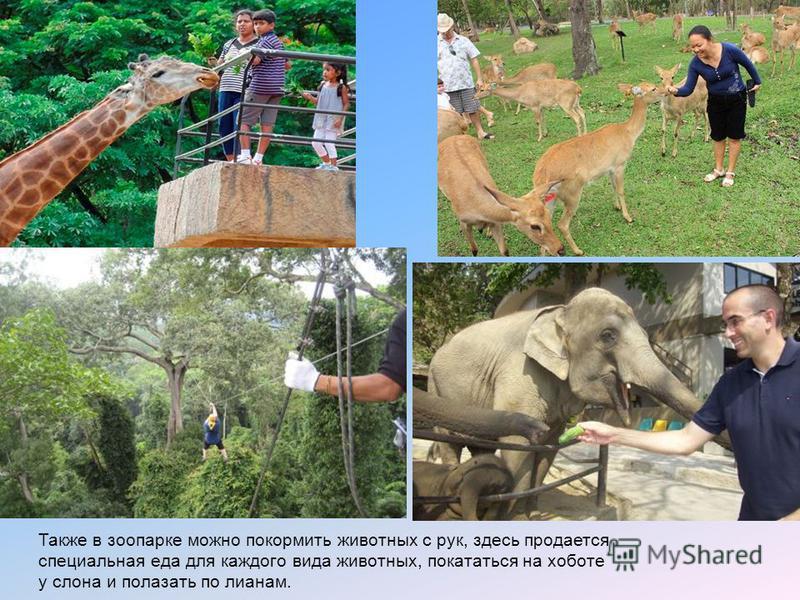 Также в зоопарке можно покормить животных с рук, здесь продается специальная еда для каждого вида животных, покататься на хоботе у слона и полазать по лианам.