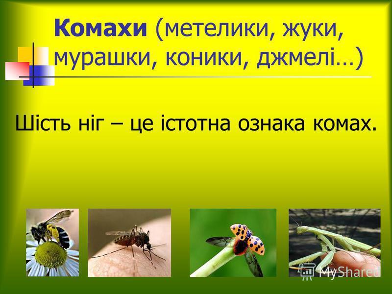 Комахи (метелики, жуки, мурашки, коники, джмелі…) Шість ніг – це істотна ознака комах.