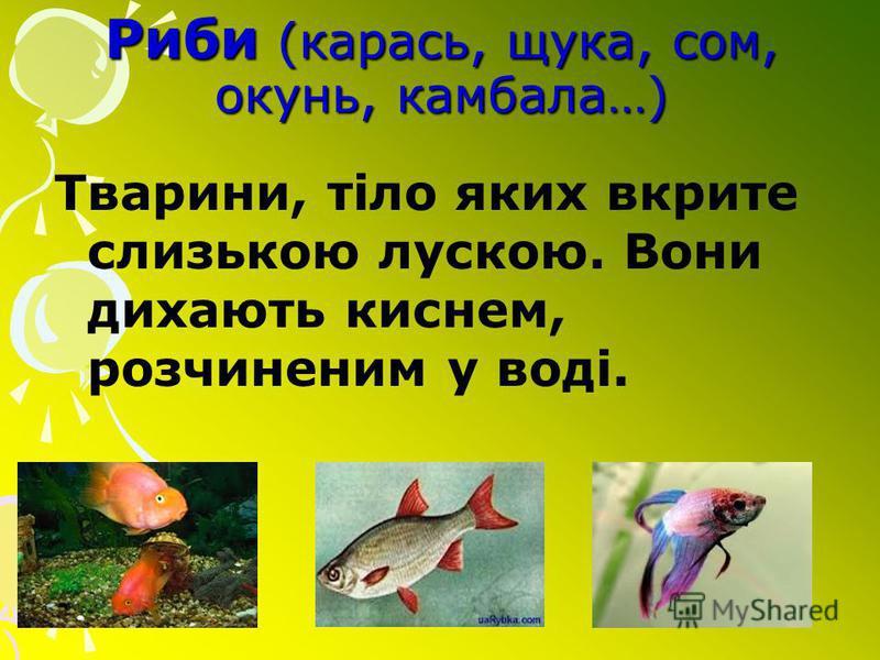 Риби (карась, щука, сом, окунь, камбала…) Тварини, тіло яких вкрите слизькою лускою. Вони дихають киснем, розчиненим у воді.