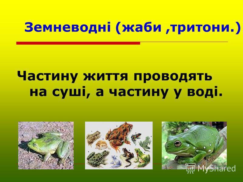 Земневодні (жаби,тритони.) Частину життя проводять на суші, а частину у воді.