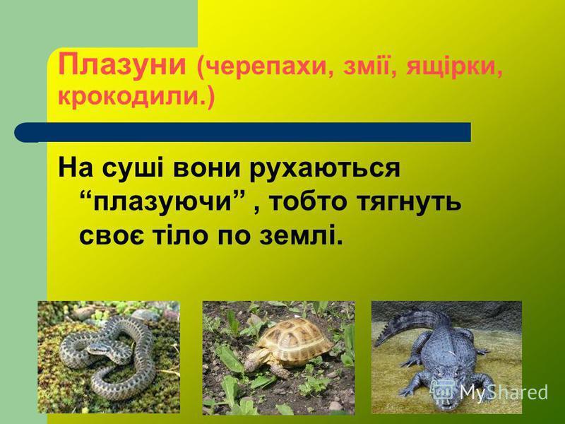 Плазуни (черепахи, змії, ящірки, крокодили.) На суші вони рухаються плазуючи, тобто тягнуть своє тіло по землі.