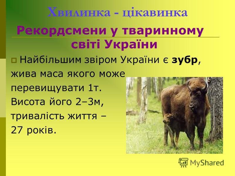 Хвилинка - цікавинка Рекордсмени у тваринному світі України Найбільшим звіром України є зубр, жива маса якого може перевищувати 1т. Висота його 2–3м, тривалість життя – 27 років.