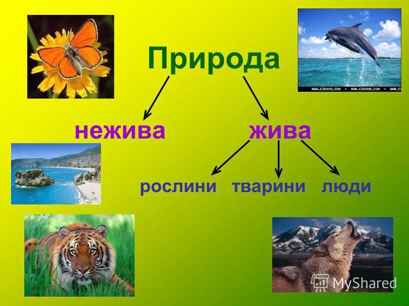Природа нежива жива рослини тварини люди