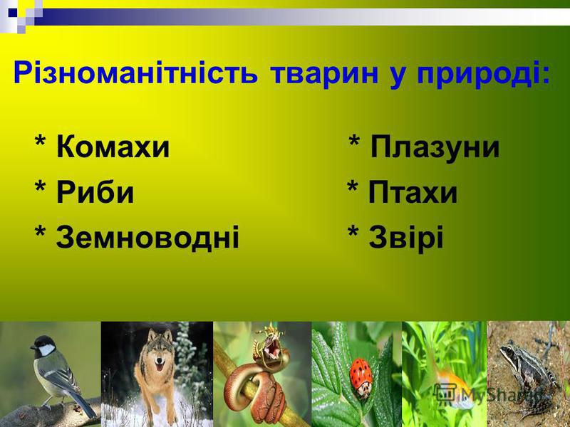 Різноманітність тварин у природі: * Комахи * Плазуни * Риби * Птахи * Земноводні * Звірі