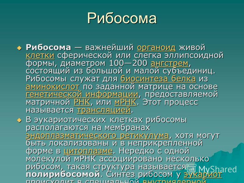 Рибосома Рибосома важнейший органоид живой клетки сферической или слегка эллипсоидной формы, диаметром 100200 ангстрем, состоящий из большой и малой субъединиц. Рибосомы служат для биосинтеза белка из аминокислот по заданной матрице на основе генетич