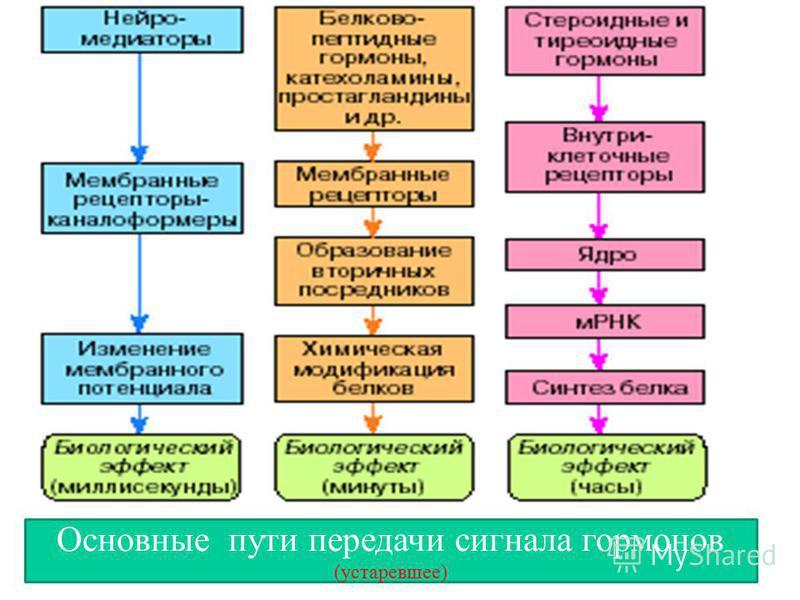 Основные пути передачи сигнала гормонов (устаревшее)