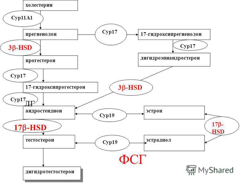 холестерин прегненолон прогестерон 17-гидроксипрогестерон андростендион тестостерон 17-гидроксипрегненолон дегидроэпиандростерон эстрон эстрадиол дигидротестостерон Сур 19 17 - HSD 3 -HSD Cyp11A1 Cyp17 3 -HSD Cyp17 ФСГ ЛГ