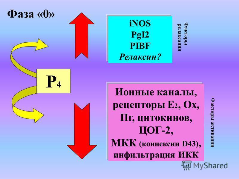 Факторы релаксации Факторы активации iNOS PgI2 PIBF Релаксин? Ионные каналы, рецепторы Е 2, Ох, Пг, цитокинов, ЦОГ-2, МКК (коннексин D43), инфильтрация ИКК Р4Р4 Фаза «0»
