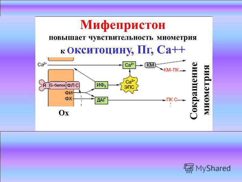 Механизм действия: окситоцин + 7-TMS рецептор Gq-белок ФЛ С ДАГ + ИФ3 Ca2+ сокращения матки Ох Сокращение миометрия Мифепристон повышает чувствительность миометрия к О кситоцину, Пг, Са++