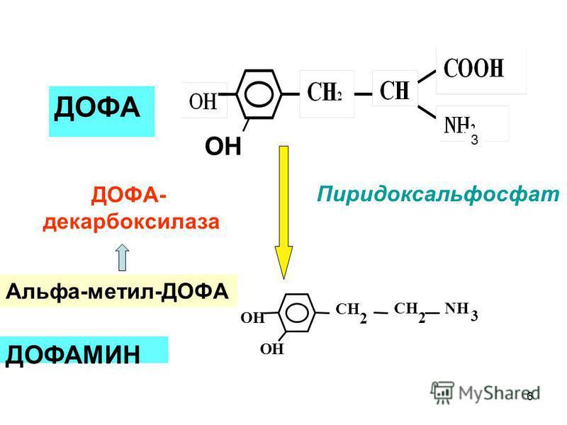 ДОФАМИН ОН ДОФА ОН NH 3 ОН СН 2 СН 2 ДОФА- декарбоксилаза Пиридоксальфосфат Альфа-метил-ДОФА 3 6