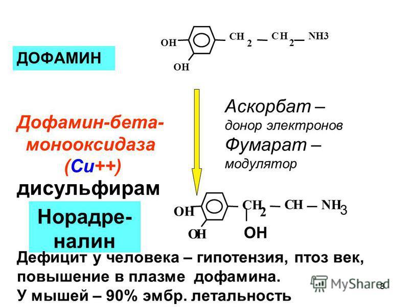 ДОФАМИН Норадре- налин ОН NH 3 ОН СН 2 СН ОН NH3 ОН СН 2 СН 2 ОН Дофамин-бета- монооксида за (Cu++) Аскорбат – донор электронов Фумарат – модулятор Дефицит у человека – гипотензия, птоз век, повышение в плазме дофамина. У мышей – 90% эмбр. летальност